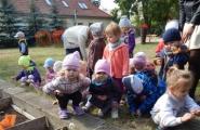 2015-09-14 - Kotki - Zakładamy hodowlę tulipanów w ogrodzie przedszkolnym