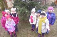 2015-12-15 - Biedronki - Ubieramy choinkę dla ptaków