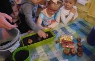 2016-04-13 - Biedronki - Zakładamy zielony kącik przyrody