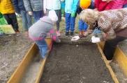 2017-03-29 - Sowy - Zakładamy ogródki warzywne