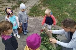 2019-09-20 - Żabki - Zbieramy liście i kasztany