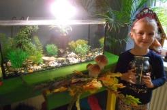 2019-10-01 - Biedronki - Gabrysia przyniosła rybki do naszego akwarium