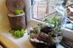 2020-01-27 - Kotki - Mała zmiana naszej sali, dziękujemy za rośliny dla naszego kącika
