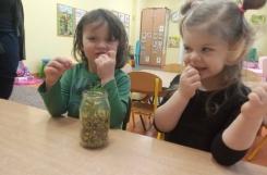 2021-03-12 - Żabki - Smakujemy kiełki z naszego kącika przyrody