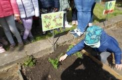 2021-05-05 - Mrówki - Zakładamy ogródek
